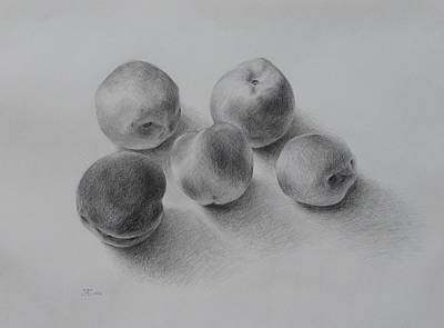 Drawing - Peach Study by Jackie Hoats Shields