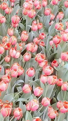 Photograph - Peach Tulips 2 by Oleg Zavarzin