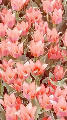 Photograph - Peach Tulips by Oleg Zavarzin