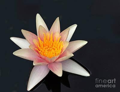 Blooming Digital Art - Peach Water Lilly by Linda Phelps