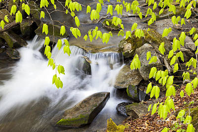 Photograph - Peacham Brook Spring by Alan L Graham