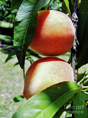 Photograph - Peaches by D Hackett