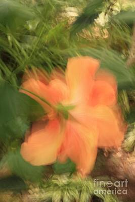 Photograph - Peachy Chiffon by Cathy Dee Janes