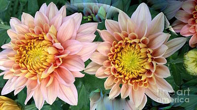 Peachy Chrysanthemums Art Print by Jeannie Rhode