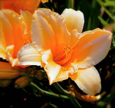 Peach Lilly Photograph - Peachy Daylily by Clara Darlene Reger