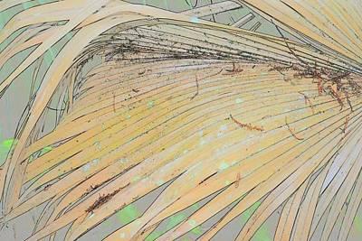 Photograph - Peachy Palm by Florene Welebny