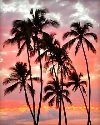 Photograph - Peachy Palms by Jeff Cook