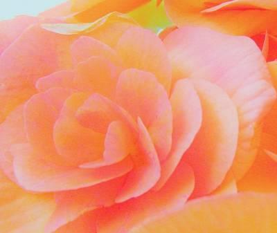 Peachy Perfection Art Print