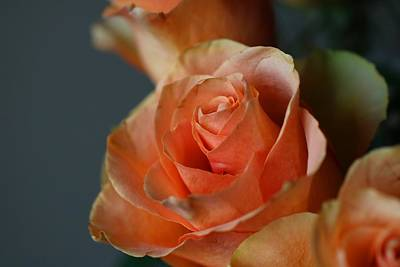 Photograph - Peachy Roses by Kathryn Meyer