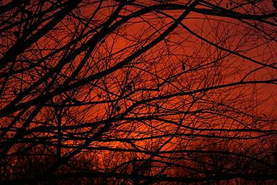 Photograph - Peachy Sunset by Kathryn Meyer