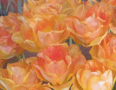 Photograph - Peachy Tulips by Karen Molenaar Terrell