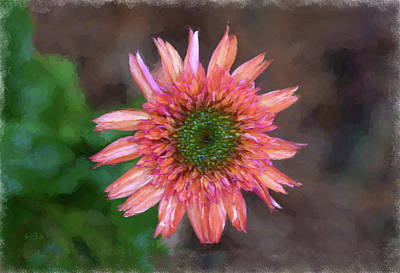 Photograph - Peachy Wet Gerbera Daisy From Above  by Sandi OReilly