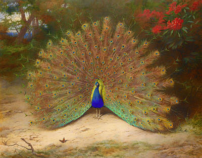 Flower Display Painting - Peacock And Butterfly by Mountain Dreams