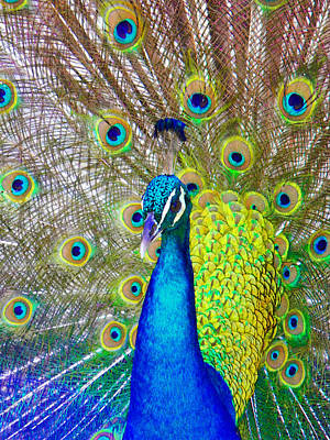 Photograph - Peacock by Andy Jeter