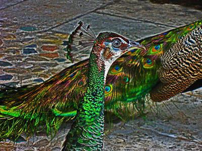 Peacock. Original by Andy Za