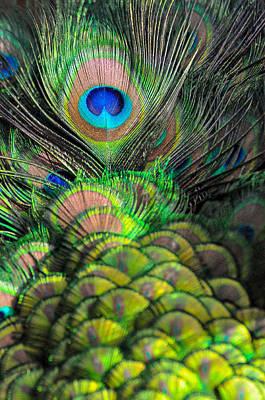 Peacock Brilliance Art Print by Emilia Brasier
