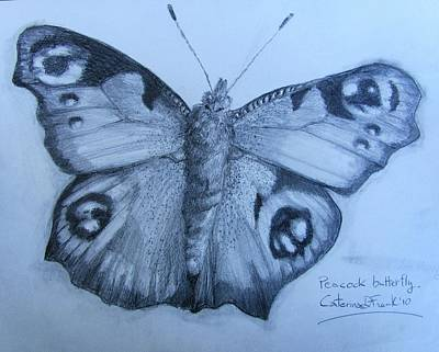 Drawing - Peacock Butterfly Drawing by Caterina Frank