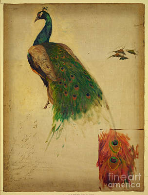 Kenyon Painting - Peacock by Celestial Images