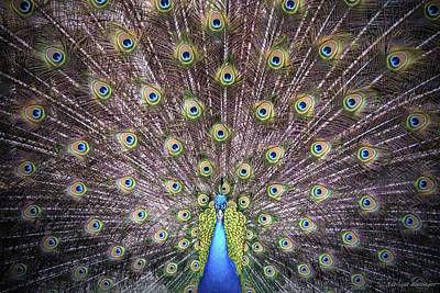 Photograph - Peacock Courtship Display by Melissa Bittinger