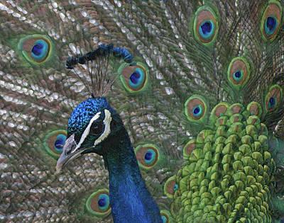 Photograph - Peacock Enhanced by Ernie Echols