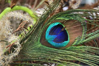 Photograph - Peacock Eye by Living Color Photography Lorraine Lynch