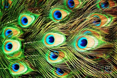 Peacock Photograph - Peacock Eyes by MingTa Li