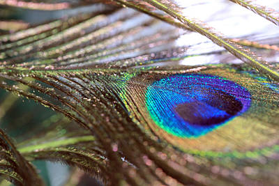 Photograph - Peacock Feather And Strands by Angela Murdock