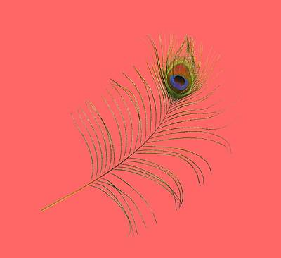 Photograph - Peacock Feather by Bradford Martin