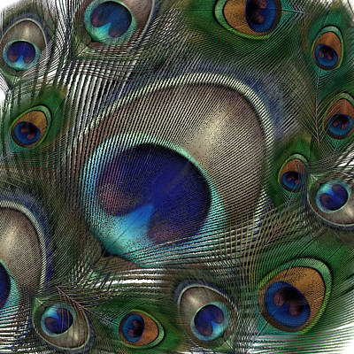 Photograph - Peacock Feather Heaven by Gary Crockett