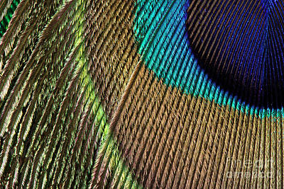 Photograph - Peacock Feather Macro by Jason Kolenda