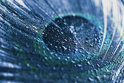 Photograph - Peacock Feather Macro Waterdrops by Sharon Mau