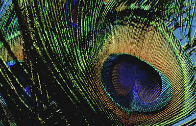 Photograph - Peacock Feather by Michael Mogensen