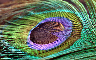 Multi Colored Photograph - Peacock Feather by Milind Torney