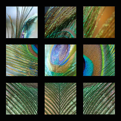 Compilation Photograph - Peacock Feather Mosaic by Lisa Knechtel