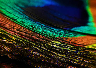 Photograph - Peacock Feather by Nathan Little