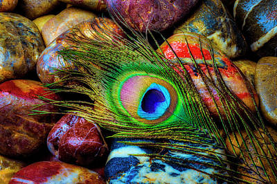 Photograph - Peacock Feather On Wet Rocks by Garry Gay