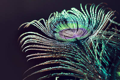 Photograph - Peacock Feather With Dark Background by Angela Murdock