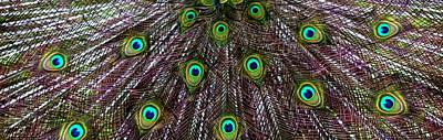 Photograph - Peacock Feathers Upside Down by Valerie Ornstein