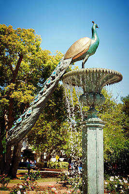 Photograph - Peacock Fountain 2 by Valerie Reeves