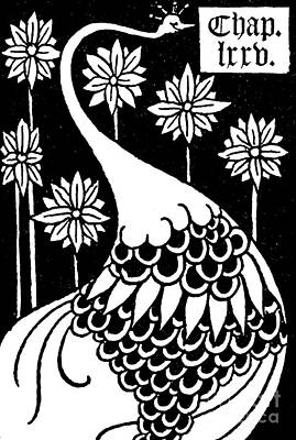 Peacock Drawing - Peacock Illustration From Le Morte D'arthur By Thomas Malory by Aubrey Beardsley