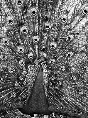 Photograph - Peacock In Black And White by Steven Ralser
