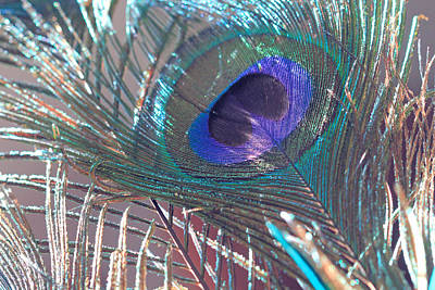 Photograph - Peacock In Pastel by Angela Murdock