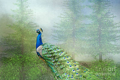 Print featuring the photograph Peacock In The Forest by Bonnie Barry