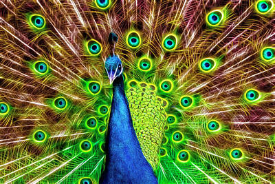Photograph - Peacock Intensified  by Wes and Dotty Weber