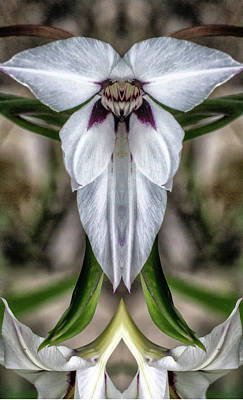 Photograph - Peacock Lily 3 Pareidolia by Constantine Gregory