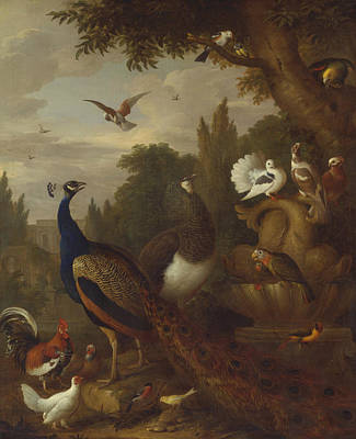 Painting - Peacock, Peahen, Parrots, Canary, And Other Birds In A Park by Jacob Bogdani