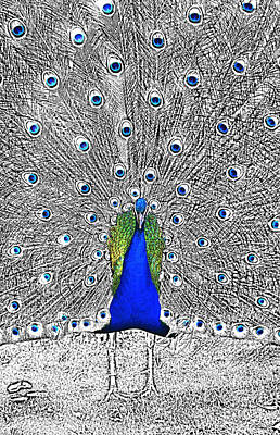 Digital Art - Peacock Plumage Color Splash Selective Color Digital Art by Shawn O'Brien