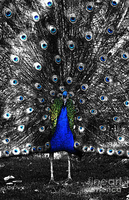 Digital Art - Peacock Plumage Color Splash Selective Color Fresco Digital Art by Shawn O'Brien