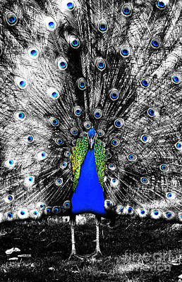Digital Art - Peacock Plumage Color Splash Selective Color Ink Outlines Digital Art by Shawn O'Brien