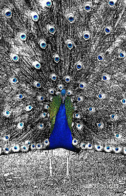 Digital Art - Peacock Plumage Color Splash Selective Color Stamp Digital Art by Shawn O'Brien